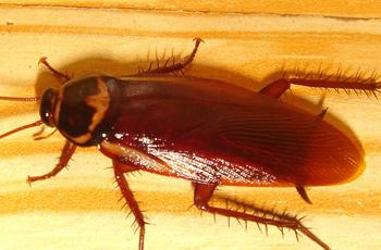 Bed Bug Exterminator West Valley City